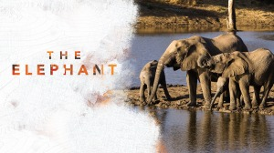 elephant5 (1)