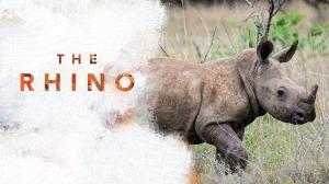 rhino5 (1)
