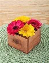 Netflorist - Geberas in wooden box